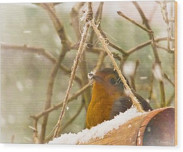 Robin In Winter Wood Print by Yvon van der Wijk