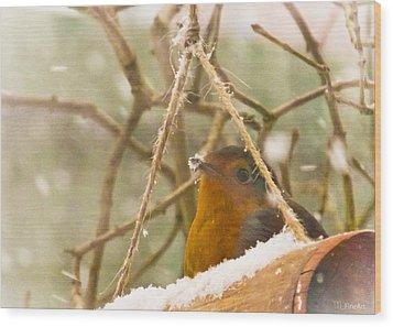 Robin In Winter Wood Print