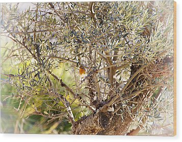 Robin Perched On Olive Tree Wood Print