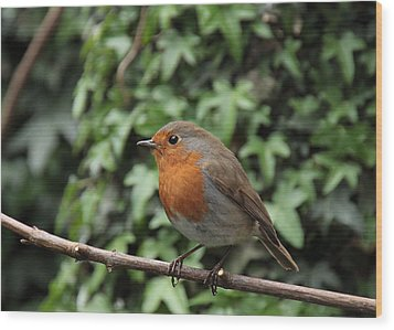 Robin Wood Print by Peter Skelton