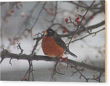 Robin Winter Wood Print by Alicia Knust