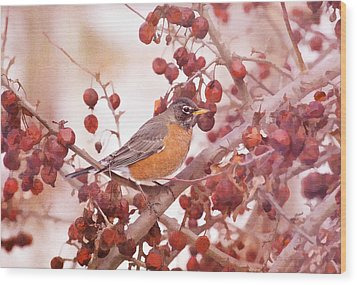 Robin With Red Berries Wood Print by Daphne Sampson