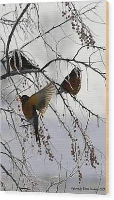 Robins Cold Breakfast Wood Print by Rebecca Adams