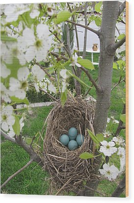 Wood Print featuring the photograph Robins Egg Nest by Margaret Newcomb