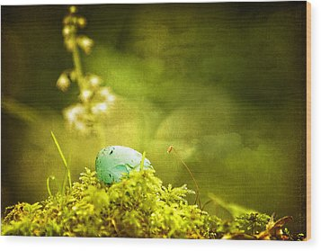 Wood Print featuring the photograph Robin's Egg On Moss by Peggy Collins