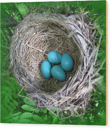 Wood Print featuring the photograph Robin's Eggs by Ramona Johnston