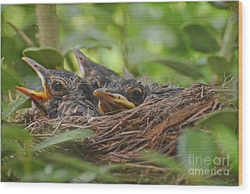 Robins In The Nest Wood Print by Debbie Portwood