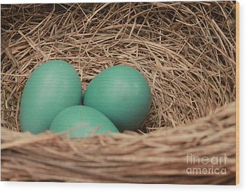 Robins Three Blue Eggs Wood Print