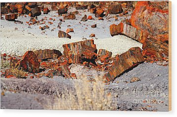 Rock Garden Wood Print by Shawn MacMeekin