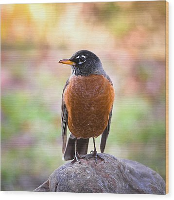 Wood Print featuring the photograph Rock-n-robin by Annette Hugen