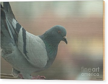 Rock Pigeon Wood Print