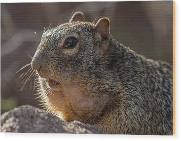 Wood Print featuring the photograph Rock Squirrel by Beverly Parks