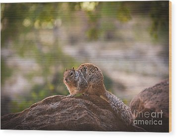 Rock Squirrel In Zion Wood Print by Robert Bales