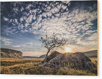 Rock Tree And Rising Sun Wood Print