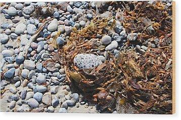 Rock Weed Wood Print