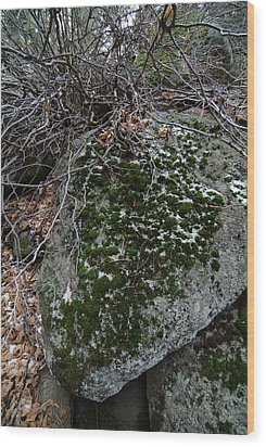 Rock With Lichen And Snow Wood Print