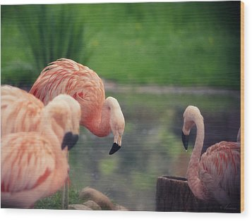 Rocking Pink Wood Print by Maria Angelica Maira