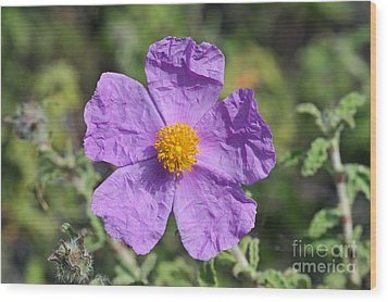 Wood Print featuring the photograph Rockrose Flower by George Atsametakis