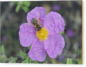Wood Print featuring the photograph Rockrose Flower With Bee by George Atsametakis
