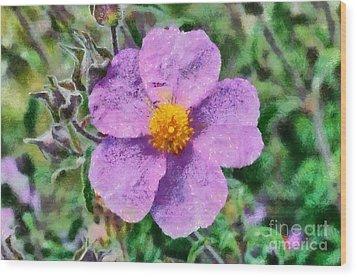 Rockrose Wild Flower Wood Print by George Atsametakis