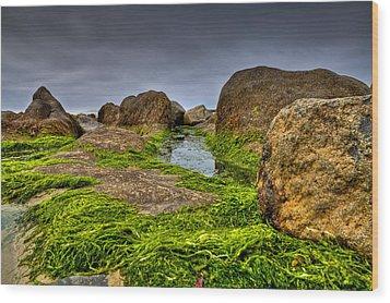 Rocks And Seaweed Wood Print