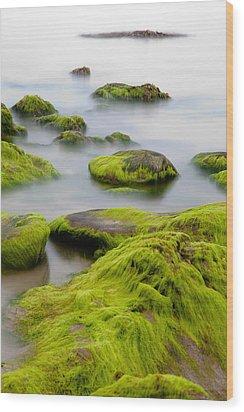 Rocks Or Boulders Covered With Green Seaweed Bading In Misty Sea  Wood Print by Dirk Ercken