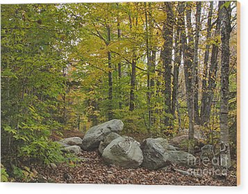 Rocky Forest Path Wood Print