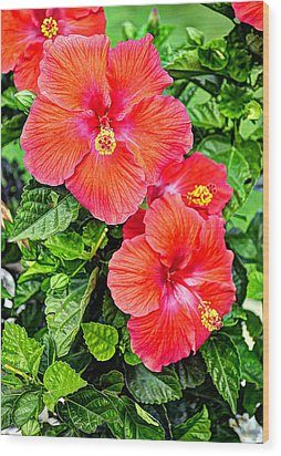 Rocky Hill Hibiscus Wood Print by Craig T Burgwardt