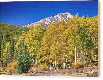Rocky Mountain Autumn Bonanza Wood Print by James BO  Insogna
