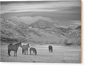 Rocky Mountain Country Morning Bw Wood Print by James BO  Insogna