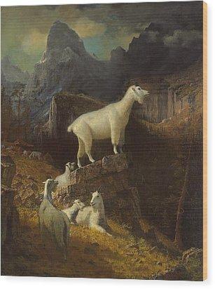 Rocky Mountain Goats Wood Print by Albert Bierstadt