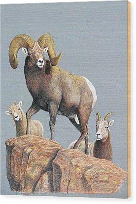 Rocky Mountain Ram Ewe And Lamb Wood Print