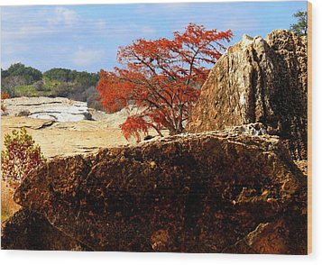 Rocky Tree Wood Print by David  Norman