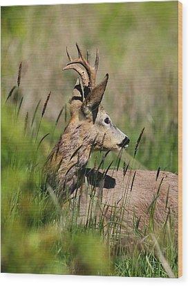Roe Deer Wood Print by Dragomir Felix-bogdan