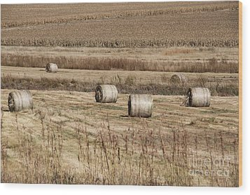 Roll On The Hay Wood Print by Taschja Hattingh