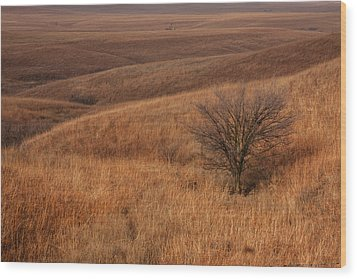 Rolling Hills Wood Print by Scott Bean