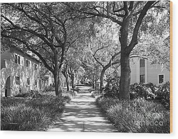 Rollins College Landscape Wood Print by University Icons