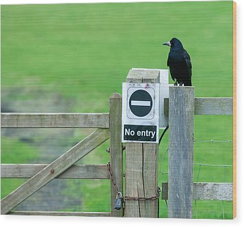 Rook On Guard Wood Print by Avian Resources