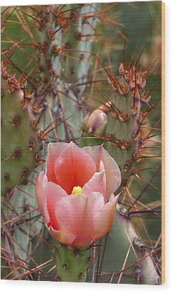 Wood Print featuring the photograph Rooney's Prickly Pear by Cindy McDaniel