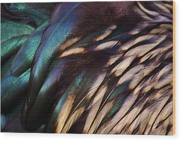 Rooster Feathers Wood Print by Paulette Thomas