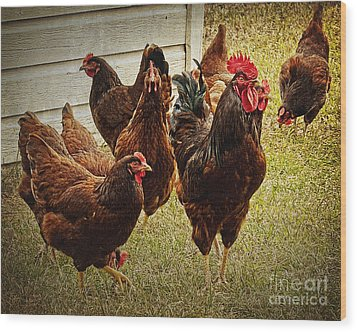 Rooster's Flock Wood Print by Lee Craig