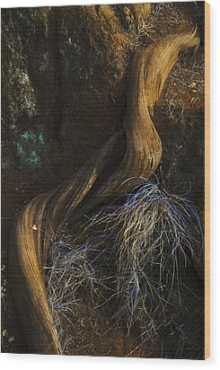Wood Print featuring the photograph Tree Root by Yulia Kazansky