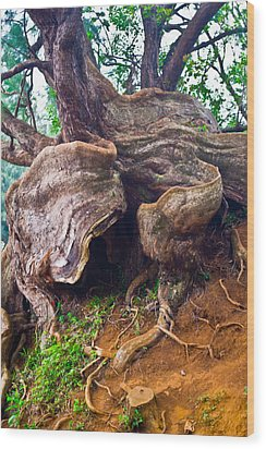 Roots Wood Print by Matt Radcliffe