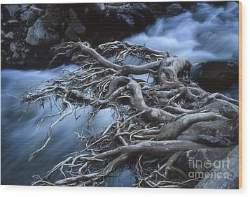 Roots Over Ozark Stream Wood Print by Garry McMichael