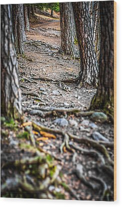 Wood Print featuring the photograph Rootway by Matti Ollikainen