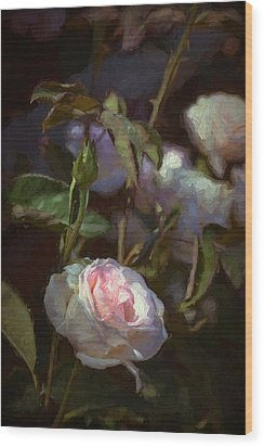 Rose 122 Wood Print by Pamela Cooper
