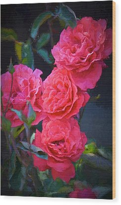 Rose 138 Wood Print by Pamela Cooper