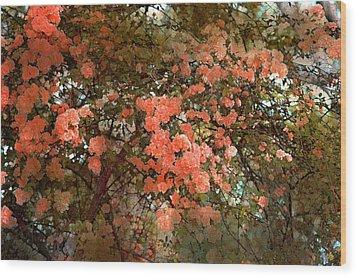 Rose 180 Wood Print by Pamela Cooper