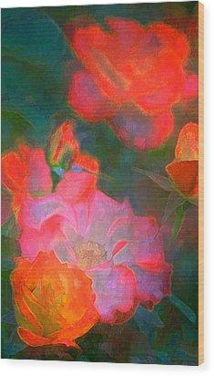 Rose 187 Wood Print by Pamela Cooper