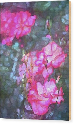 Rose 188 Wood Print by Pamela Cooper